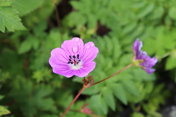 WHAT ARE FLOWERING PLANTS GIVE TWO EXAMPLES?
